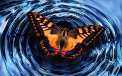 Butterfly Effect of Us